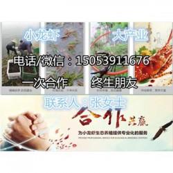 镇海龙虾苗多少钱一斤—龙虾繁育基地