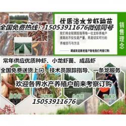 怀宁县淡水龙虾苗批发价格—种虾厂家出售价