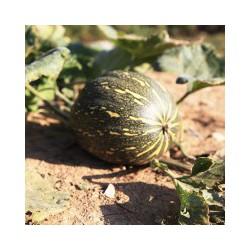 火银瓜哪里有_买生态甜瓜就来棒棒农业