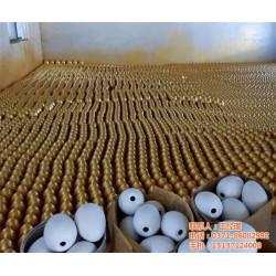 金蛋供应、金蛋、金尚达